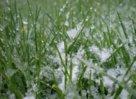 Летняя лужайка или сохраним газон зимой