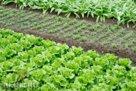Правильное планирование огорода