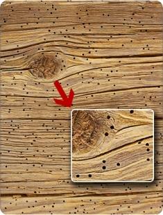 результаты деятельности жука точильщика