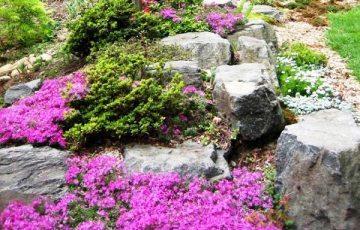 альпийская горка - для всех любителей гор, красивая игра фактуры камня и цветов в собственном саду