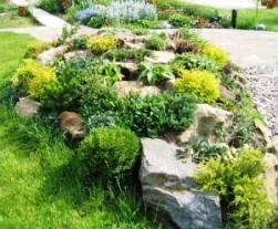 соотношение растений и камней в альпийской горке произвольное, главное, чтобы растения не покрывали собой всю поверхность камней