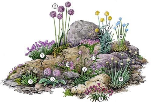 пример альпийской горки из луковичных растений
