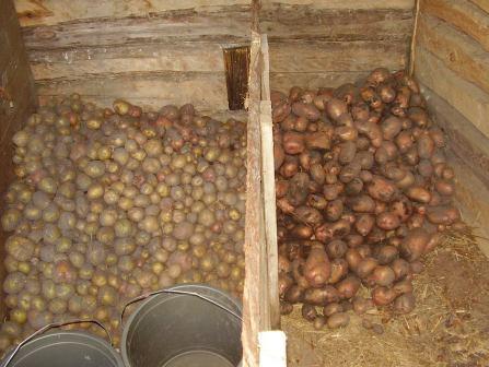 закрома для картошки