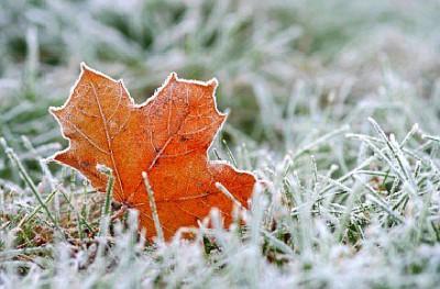 Зимний газон