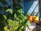 Устройство «огородика» на балконе