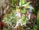 Виды флорариумов и их применение