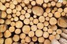 Защита древесины от грибка, насекомых и огня