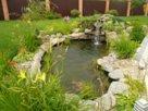Растения в искусственном пруду