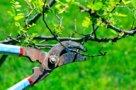 Правильная обрезка деревьев