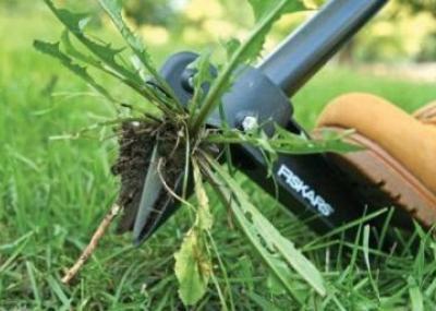 молочай сорняк огородный фото